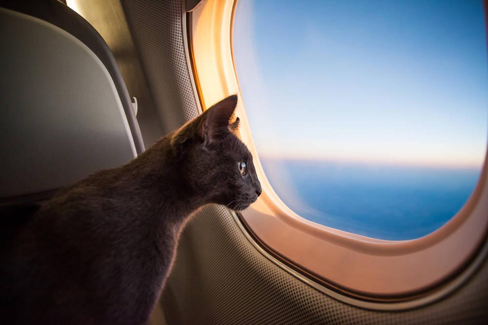 Anímate a viajar con tu mascota