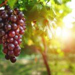 La tecnología está de actualidad en el sector del vino